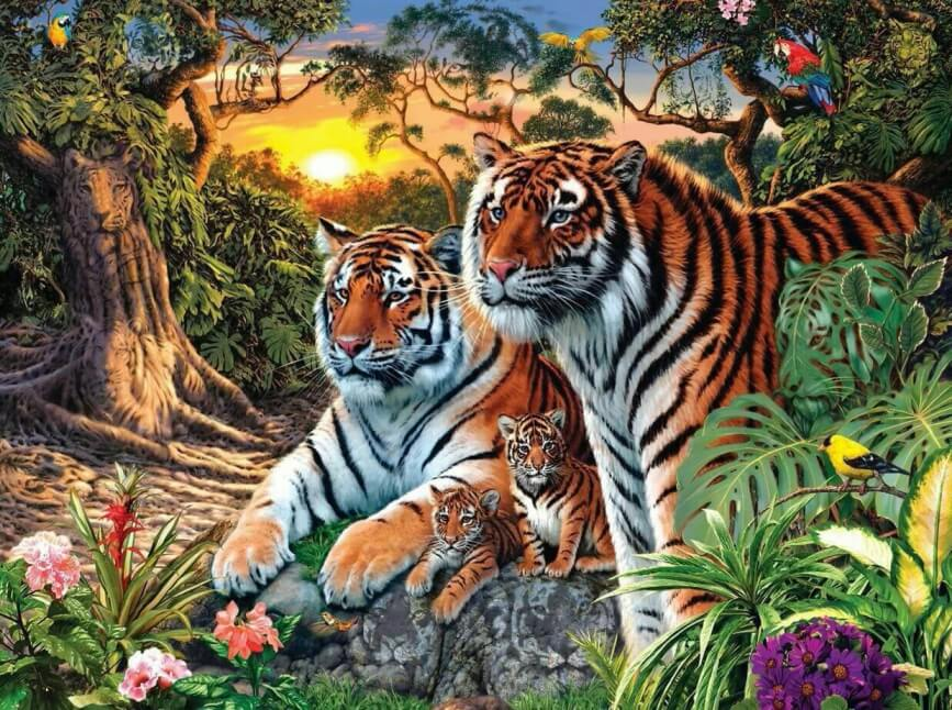 How many Tigers in this Picture