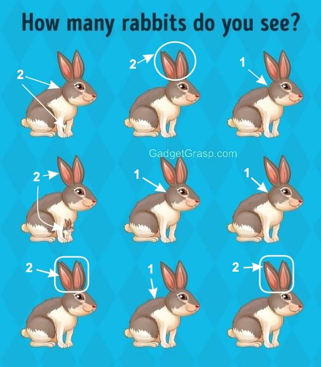 how many rabbits do you see answer